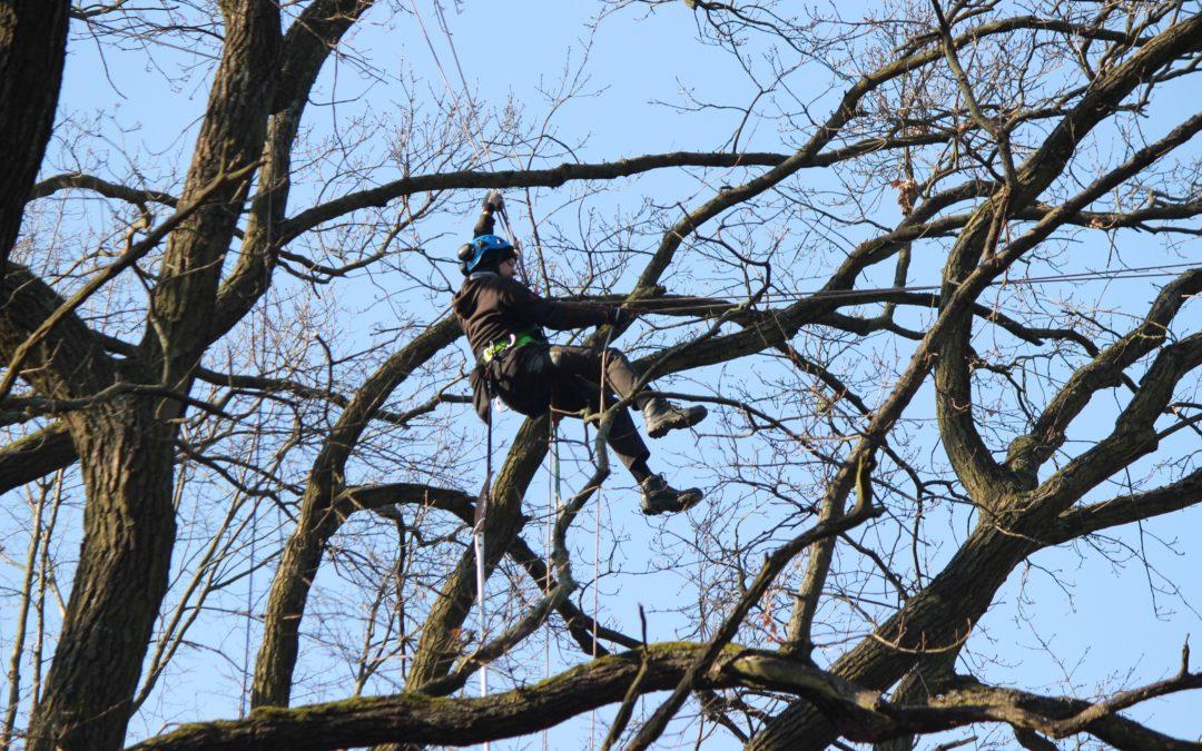 Pflege- und Abholzungsarbeiten in der Baumschule